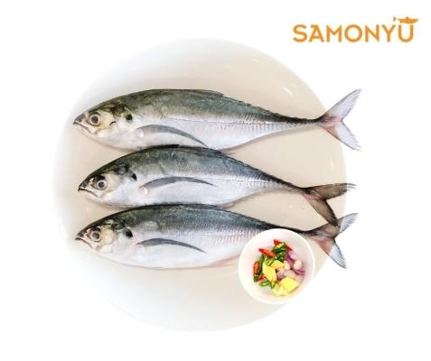 Ikan Cencaru 3pc /pkt (600-650g)