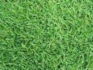 Philippines Grass Turf - Real
