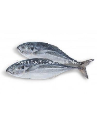 Ikan Cencaru (70-80g/nos) -Sold by kg