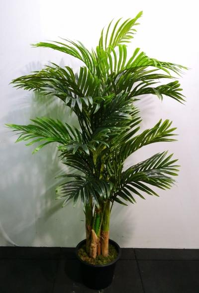 5ft Areca Palm AP104 floristkl