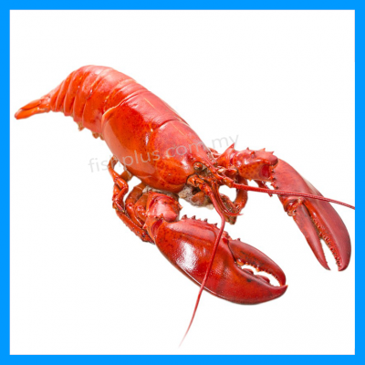 Canadian Lobster (Cooked)