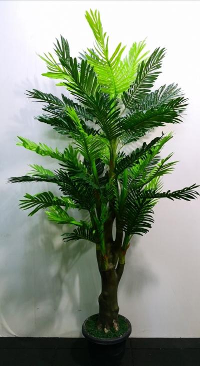 6ft Phoenix Palm AP109