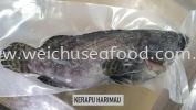 Ikan Kerapu Harimau Frozen Fish