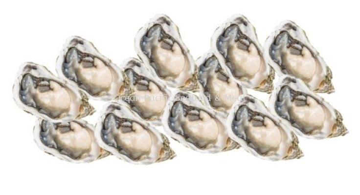 Oyster Half Shell /Tiram (80g/pcs) X12PCS