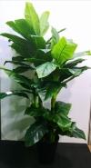7ft Spathiphyllum Mauna AP212 floristkl Artificial Plant (Sell & Rent)