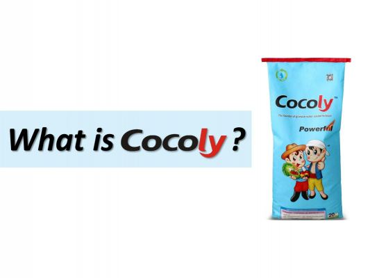Cocoly Facts