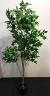 6ft Hapiness Tree APL322 floristkl Artificial Plant (Sell & Rent)