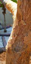 Can I Save a Tree with Termite Damage ?