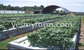 Aquaponics Others