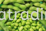 XK720 Green SoyBean (Peeled) 500gm  Frozen Products