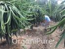 Phalada 108 BC (Biomass composter ) ORGANIC FARM INPUTS