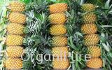 DRIED PINAPPLE - 100% PURITY DRIED FRUITS AND NUTS NON-ORGANIC FOOD PRODUCTS