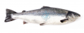 Premium Alantic Salmon Fillet Boneless