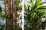 6ft Bamboo Tree AP211 floristkl Artificial Plant (Sell & Rent)