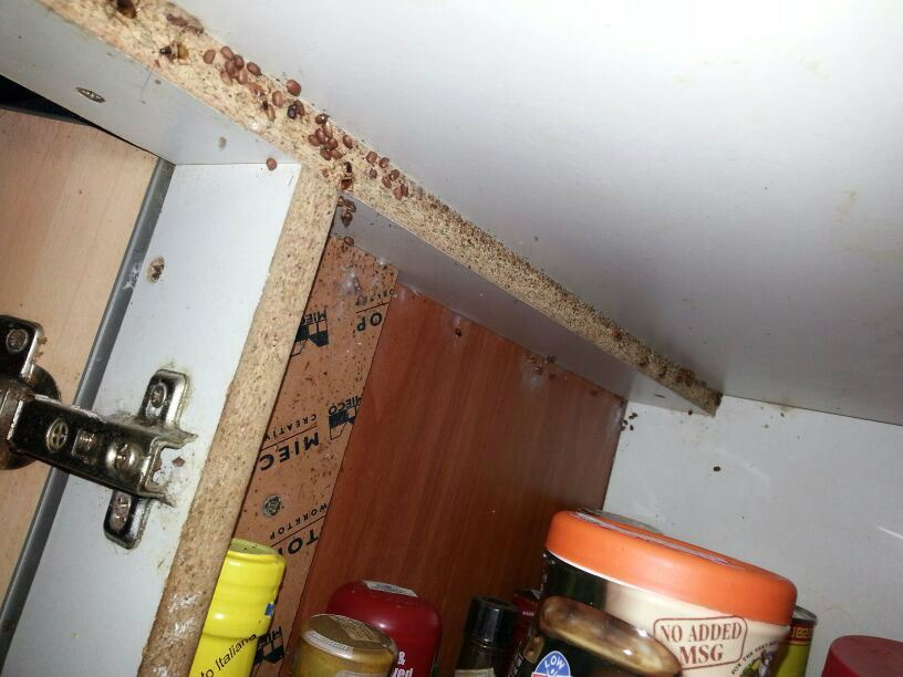 Cockroaches attacking