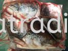XK631  Frozen Salmon Head  Fish Frozen Seafood
