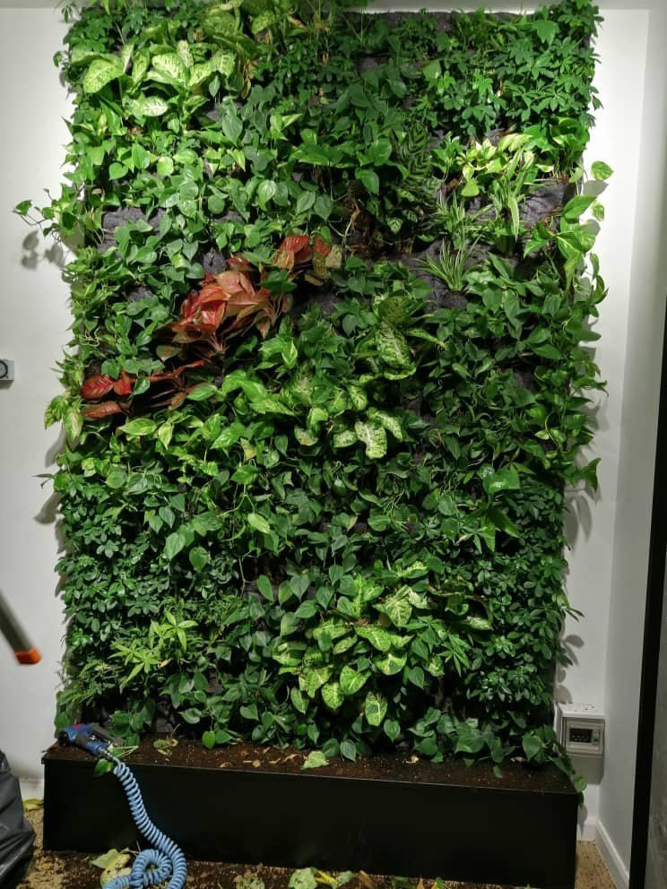 vertical garden chin and toh