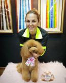 Pets Icon Grooming Academy