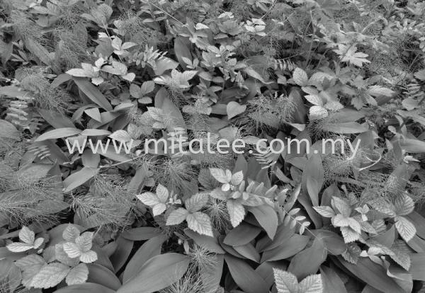 8-914_Forest_Floor_prn Komar Photomural Vol:14 Wallpaper (0.53m x 10m) Malaysia, Johor Bahru (JB), Selangor, Kuala Lumpur (KL), Melaka Supplier, Supply | Mitalee Carpet & Furnishing Sdn Bhd