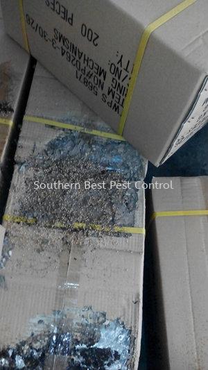 白蚁防治 白蚁防治   Service   Southern Best Pest Control Sdn Bhd