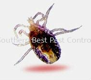 Äñòý¿ØÖÆ Äñòý¿ØÖÆ   Service | Southern Best Pest Control Sdn Bhd