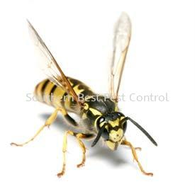 Hornets Control Hornets Control Johor Bahru (JB), Johor, Malaysia Service | Southern Best Pest Control Sdn Bhd