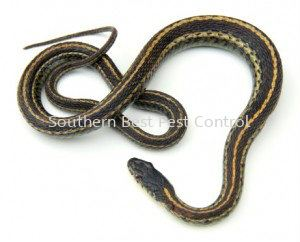 Snakes Control Snakes Control Johor Bahru (JB), Johor, Malaysia Service | Southern Best Pest Control Sdn Bhd