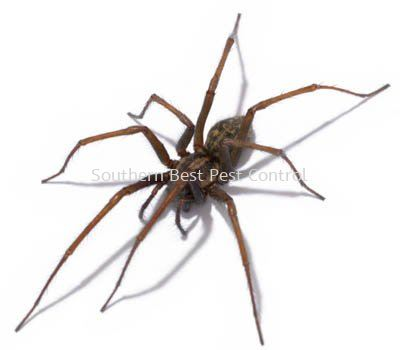 Spiders Control Spiders Control Johor Bahru (JB), Johor, Malaysia Service   Southern Best Pest Control Sdn Bhd