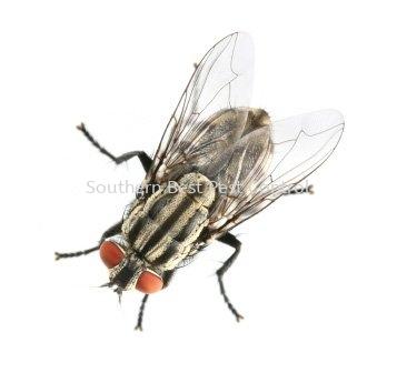 House Flies Control House Flies Control Johor Bahru (JB), Johor, Malaysia Service | Southern Best Pest Control Sdn Bhd