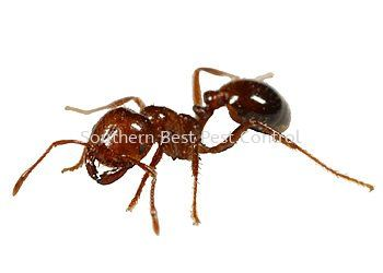 Ants Control Ants Control Johor Bahru (JB), Johor, Malaysia Service | Southern Best Pest Control Sdn Bhd