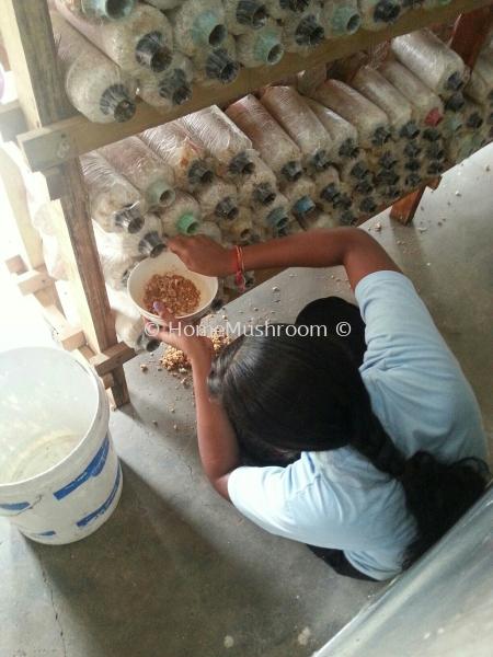 蘑菇制作过程   Supplier, Suppliers, Supplies, Supply | Home Mushroom