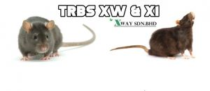 "WHAT IS TRBS ""TAMPER RESISTANT BAIT STATION""?"