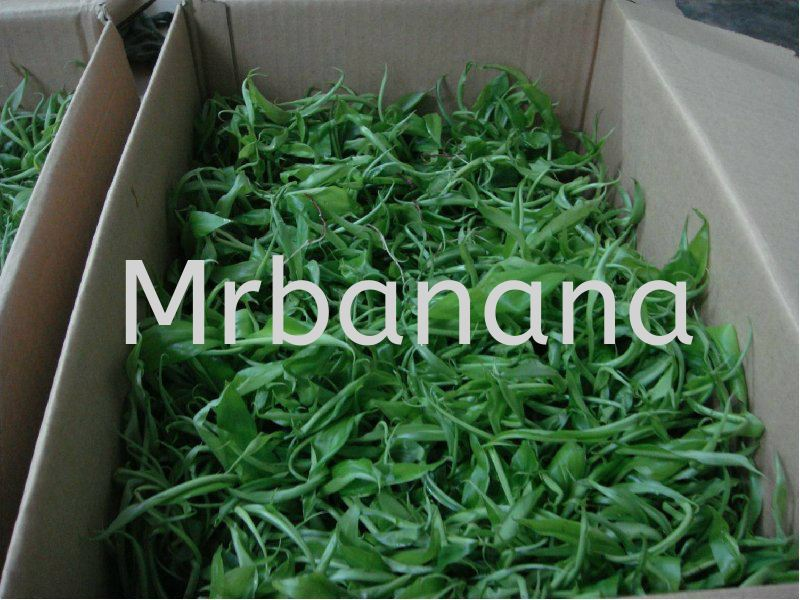 Rooted plantlets for delivery Malaysia Johor Kluang Supply Supplier Wholesaler Retailer | Simple Farm Sdn Bhd