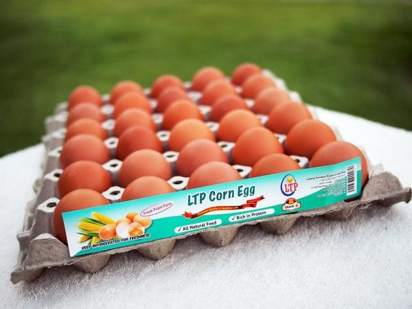 LTP Corn Egg - Grade D LTP Corn Egg Melaka, Malaysia, Negeri Sembilan, Batu Berendam, Rembau Supplier, Suppliers, Supply, Supplies | Ladang Ternakan Prudence Sdn Bhd