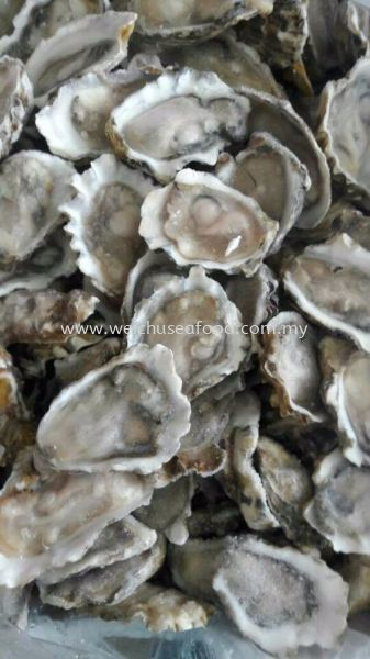 Half Shell Oyster Frozen Clam Selangor, Malaysia, Kuala Lumpur (KL), Klang Supplier, Suppliers, Supply, Supplies | Wei Chu Seafood Supply Trading Sdn Bhd