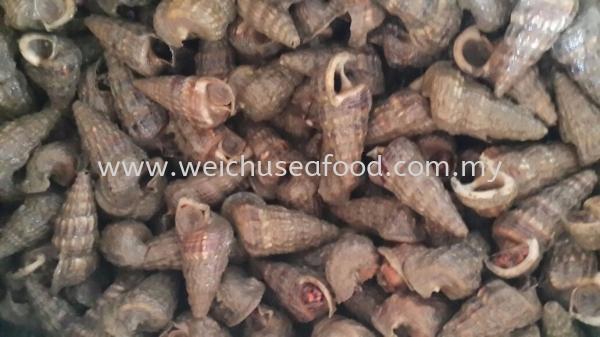 Balitong Frozen Clam Selangor, Malaysia, Kuala Lumpur (KL), Klang Supplier, Suppliers, Supply, Supplies   Wei Chu Seafood Supply Trading Sdn Bhd
