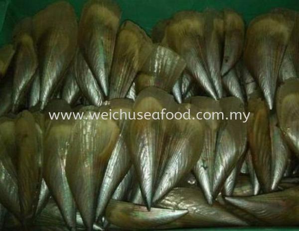 Pinna Shell Fish (Panggang Pulut) Frozen Clam Selangor, Malaysia, Kuala Lumpur (KL), Klang Supplier, Suppliers, Supply, Supplies   Wei Chu Seafood Supply Trading Sdn Bhd