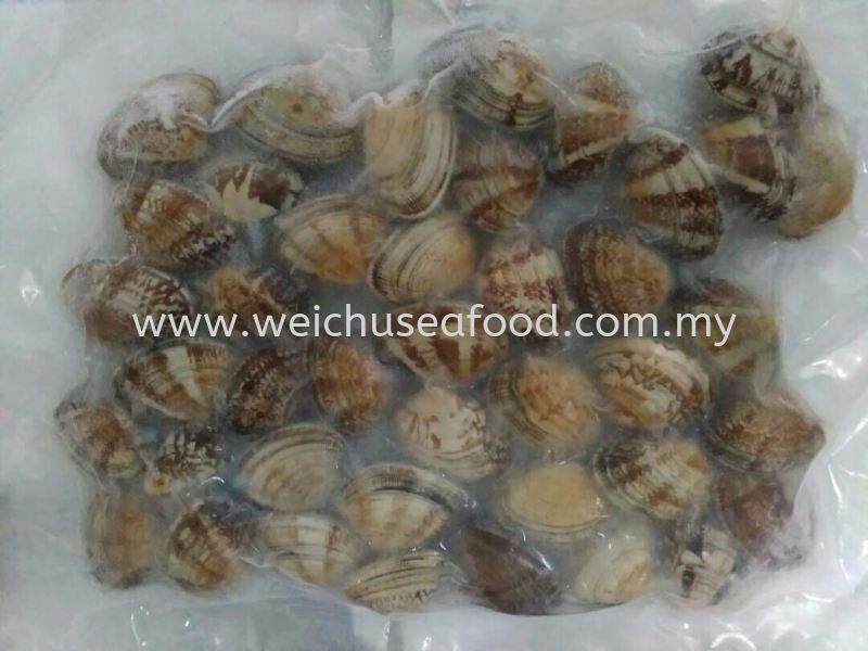 Boiled Clam (Asari Clam) Frozen Clam Selangor, Malaysia, Kuala Lumpur (KL), Klang Supplier, Suppliers, Supply, Supplies | Wei Chu Seafood Supply Trading Sdn Bhd