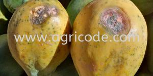 Uncontrolled crop pests and diseases! What��s going on???!!!