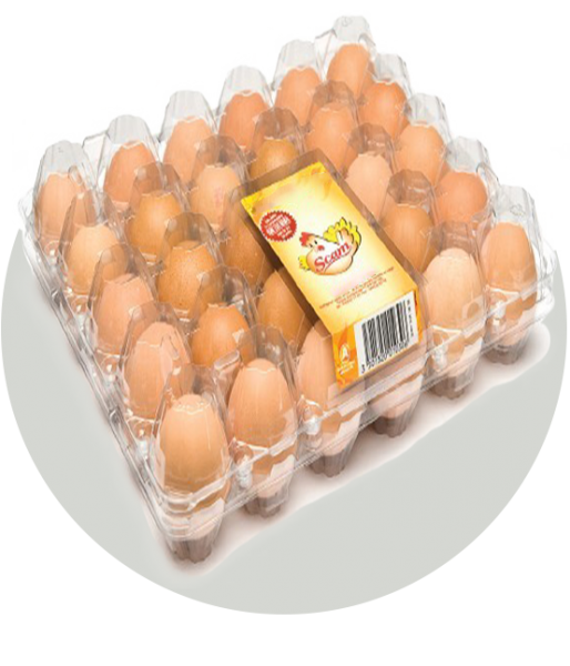 Egg Tray Machine By Industry Selangor, Malaysia, Kuala Lumpur (KL), Puchong Machine, Manufacturer, Supplier, Supply | Solo Labelling Sdn Bhd
