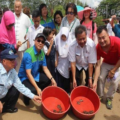 Xujie : Hope the Goverment to Build Turtle Hatchery  Centre TravelNews Malaysia Travel News | TravelNews