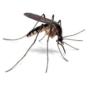 Flying Insect Control Kuala Lumpur (KL), Selangor, Malaysia Supplier, Suppliers, Supply, Supplies | XWay Sdn Bhd