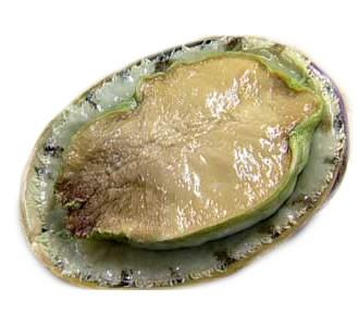 Half Shell Green Abalone Squid & Scallop Selangor, Malaysia, Kuala Lumpur (KL), Batu Caves Supplier, Suppliers, Supply, Supplies | G DAILY SUPPLY SDN BHD