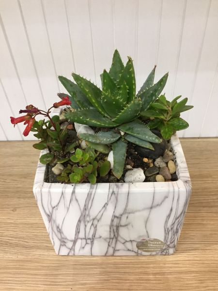 Succulent Terrarium Plant 11 Succulent Terrarium Australia, Perth Supplier, Suppliers, Supply, Supplies | Secret Blumen