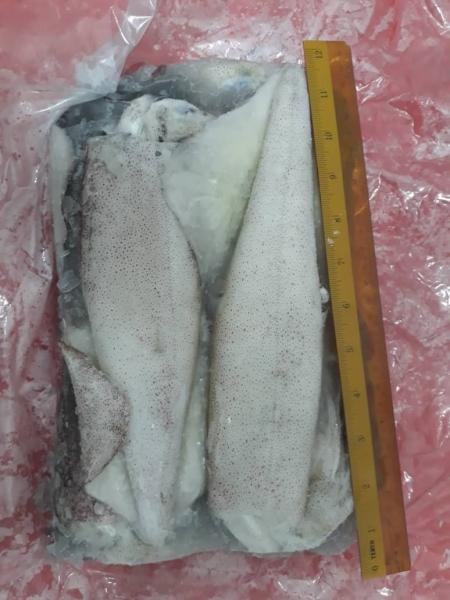 Local Squid  Frozen Squid English Version Selangor, Malaysia, Kuala Lumpur (KL), Seri Kembangan Supplier, Supply, Wholesaler, Retailer | C H Seah Fishery