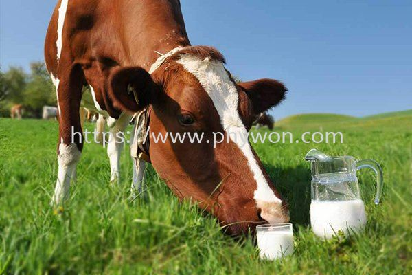 Dairy Protein Functional Dairy Protein Malaysia, Selangor, Kuala Lumpur (KL), Shah Alam Manufacturer, Supplier, Supply, Supplies   Phywon System Ingredient Sdn Bhd