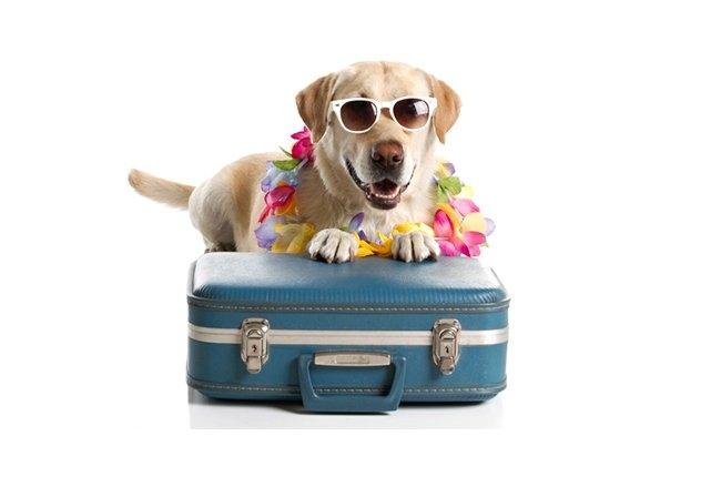 Boarding Boarding Selangor, Malaysia, Kuala Lumpur (KL), Petaling Jaya Pet, Services | Klinik Haiwan Healing Pets Sdn Bhd