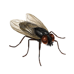 Houseflies Control