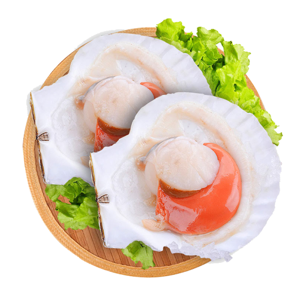Half Shell Scallop Roe Shell Products Frozen Seafood Selangor, Malaysia, Kuala Lumpur (KL), Batu Caves Supplier, Suppliers, Supply, Supplies | Ptwo Marketing Sdn Bhd