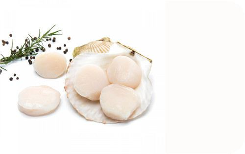 Scallop Meat Shell Products Frozen Seafood Selangor, Malaysia, Kuala Lumpur (KL), Batu Caves Supplier, Suppliers, Supply, Supplies | Ptwo Marketing Sdn Bhd